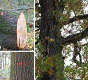 Drzewa powalać Obraz Stock