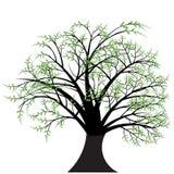 drzewa projektu wektora ilustracja wektor