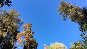 Drzewa przeciw niebu Obrazy Royalty Free