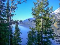 drzewa przed jeziorem przy skalistymi górami zdjęcia royalty free