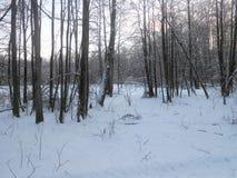 Drzewa przed polaną obraz royalty free