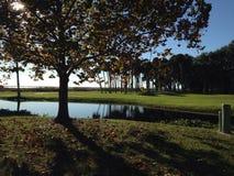 Drzewa przegapia jezioro Zdjęcia Royalty Free