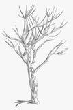 drzewa przekręcający royalty ilustracja