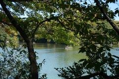 Drzewa przy centrala parka York nowym miastem zdjęcie stock