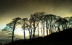 Drzewa przy Lunderston zatoką Fotografia Royalty Free