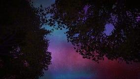 2 drzewa przy nocą zbiory