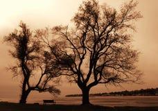 Drzewa przy plażą Obrazy Royalty Free