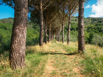 Drzewa przy Ponte Moriano, Tuscany, Włochy Obraz Royalty Free