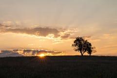 Drzewa przy rankiem Zdjęcie Royalty Free