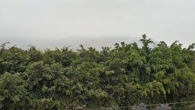 Drzewa przy rankiem obrazy royalty free