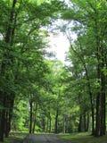 Drzewa przy Roosevelt parkiem w Edison, NJ, usa Ð ' Zdjęcie Royalty Free