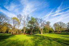 Drzewa przy Sherwood ogródów parkiem w Baltimore, Maryland obraz stock