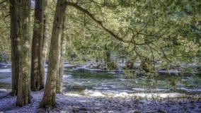 Drzewa przy strumień w zimie zdjęcia stock