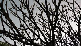 Drzewa przy swój best Obrazy Royalty Free