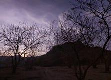 Drzewa przy wieczór są spojrzeniem jak to zdjęcie stock
