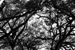 Drzewa przy zmierzchem fotografia stock