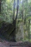 Drzewa r na ampuły skale obrazy stock