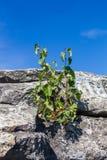 Drzewa r na kamieniach na skałach siedem braci w Sverdlovsk regionie obrazy stock