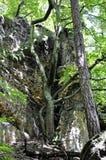 Drzewa r na skale Fotografia Royalty Free