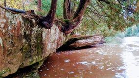 Drzewa r nad rzeką daleko skała zdjęcie royalty free