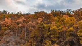 Drzewa retuszuje z pomarańcze i cyraneczką zdjęcie royalty free