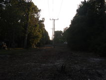 Drzewa rozjaśniający z telefonicznymi słupami Obraz Stock