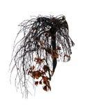 Drzewa są jak włosy Dwoisty ujawnienie, krzak Zdjęcia Stock