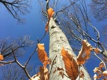 Drzewa s? p?ucami ziemia zdjęcie stock