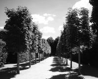 Drzewa Schönbrunn park, Wiedeń Fotografia Royalty Free