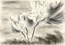 Drzewa seashore Zdjęcia Stock