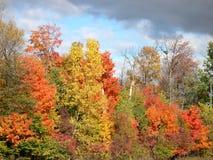 drzewa spadków Zdjęcie Royalty Free