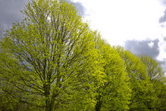 drzewa springs Fotografia Royalty Free