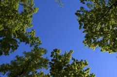 drzewa springs Obraz Stock