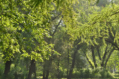 Drzewa stary park Fotografia Stock