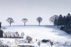 drzewa stoi samotnie na zboczu zakrywającym w śniegu w zima krajobrazie Obraz Stock
