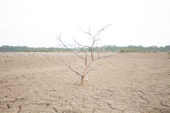 Drzewa suszą od suszy Zdjęcia Royalty Free