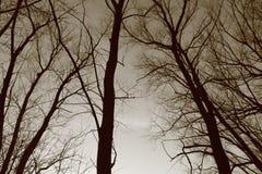 Drzewa, sylwetki drzewa Zdjęcia Royalty Free