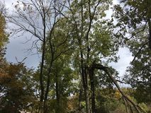 Drzewa, szarości niebo Las, natura Zdjęcia Royalty Free