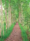 drzewa traw Zdjęcia Royalty Free