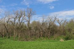 Drzewa, trawa i niebieskie niebo Zdjęcie Stock