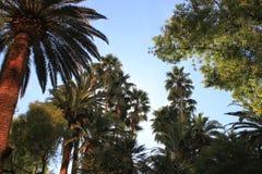 drzewa tropikalni Zdjęcia Stock