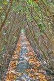 Drzewa Tunelowi Zdjęcie Royalty Free