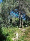 Drzewa w ścieżce fotografia stock