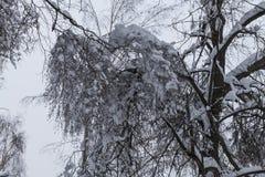 Drzewa w śniegu obrazy royalty free