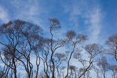 Drzewa w Australijskim odludziu fotografia royalty free