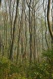 Drzewa w bagiennej ziemi zdjęcie stock