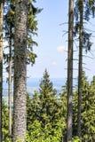 Drzewa w Bavaria Alps Obrazy Royalty Free