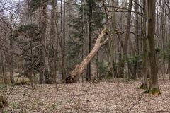 Drzewa w drewnach Obrazy Stock