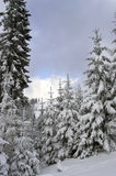 Drzewa w górach Obrazy Stock