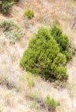 Drzewa w górach w naturze zdjęcia royalty free